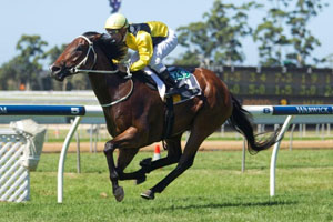 Rain Affair to bounce back to best in Challenge Stakes