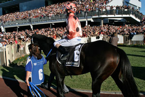 BRC bids to bring Black Caviar back to Brisbane