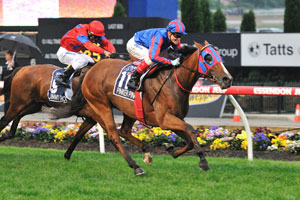 Pinker Pinker has died at Cranbourne Stables