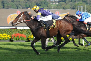 Niwot too tough in Sydney Cup