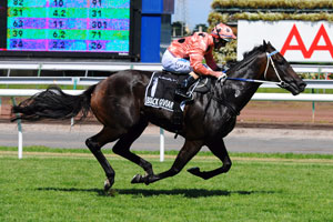 Nine Opponents for Black Caviar