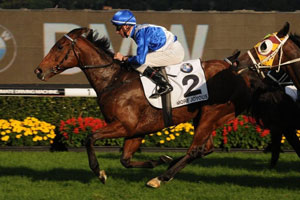 Waterhouse equals TJ's Doncaster record with 7th win