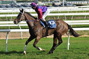 Race fitness to help King's Rose in Randwick mud