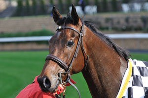 Rekindled Interest at his top for Doncaster