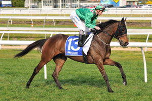 Queensland Oaks winner Scarlett Lady to retire