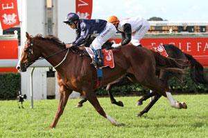 Rough Habit to serve up Queensland Derby hopefuls