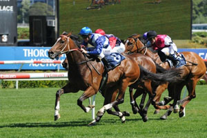 Freedman and Rogerson partnership to have first runner at Rosehill