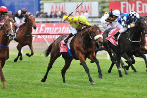 Dunaden fifty fifty to run in Melbourne Cup