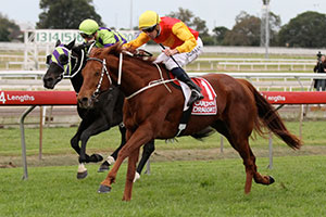 Veteran Ginga Dude Takes Out Tattersall's Cup Win