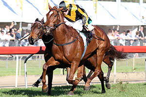 Gai's Choice to Back Up in Tiara