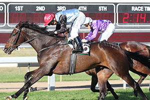 Lightly raced Shenzhou Steeds takes out Ipswich Cup