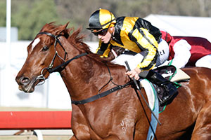 Gai's Choice to step up to Group 1 after Classic win