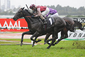 Adroitly out plugs Roi D'Jeu in Stayers Cup