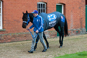 Nolen to join Moody and Black Caviar at Newmarket