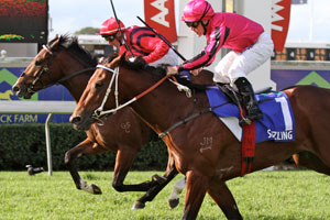 Sizzling takes out Queensland Triple Crown