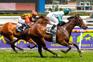 Shopaholic still on track for Stradbroke
