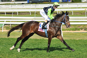 Webb looking for Spring riches with Bliss Street and Yosei