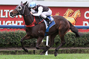 Racing Heart Takes Final Steps Towards Sydney Spring
