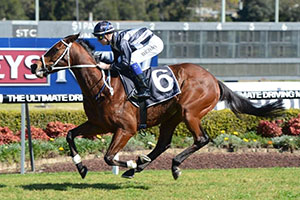 Stout Hearted to improve racing manners in Premier's Cup
