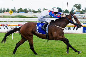 Smerdon counting on rapid recovery for Mosheen