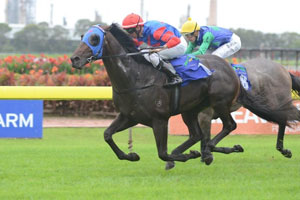 Pierro The Pick Of The Caulfield Guineas Nominations