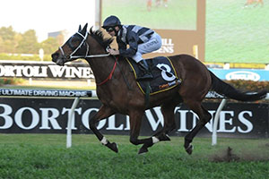 Stout Hearted one of four winners for Waller