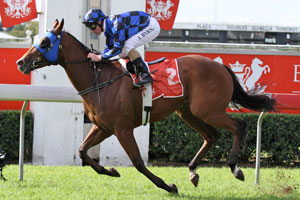 Buffering Named Queensland Horse Of The Year