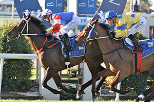 Southern Spring Hopes to Clash at Doomben