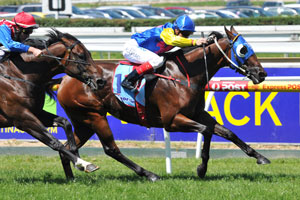Stakes Sprinter Stirling Grove Dies