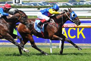 Stakes Sprinter Stirling Grove Dies