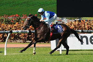 Payne has Victoria Derby plan for Honorius