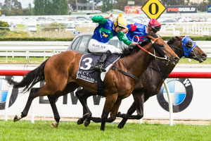 All Too Hard to head to paddock after Cox Plate
