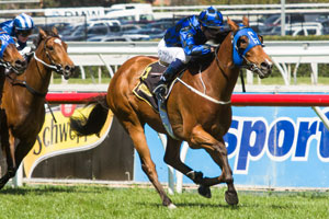 Buffering stamped himself as best sprinter with Schillaci Stakes win