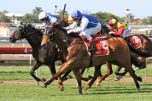 Bid Spotter Shines in First Queensland Test