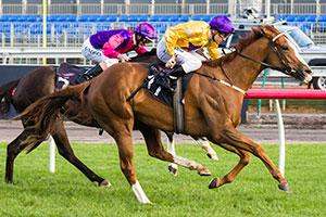 Hallowell Belle Salutes For Waterhouse in Gilgai
