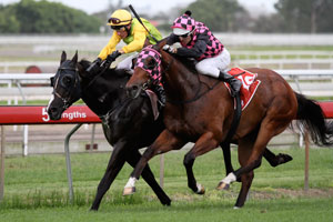Heathcote's Forgotten Spring Contender Gets Melbourne Test