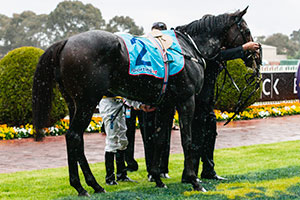 Gatewood to show true quality in Geelong Cup