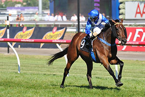 Ironstein to bypass Caulfield for Melbourne cup