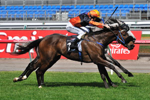 December Draw unknown at 2400m of the Caulfield Cup
