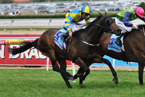 Sabrage Loses Out As Caulfield Cup Final Field Is Decided