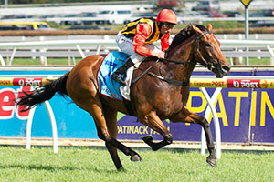 Messara to prepare Soft Sand for Oakleigh Plate