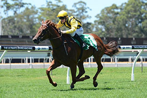Williams to ride Swing Vote in Blue Diamond Preview
