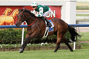 I'm Cool heading towards Stradbroke Handicap campaign