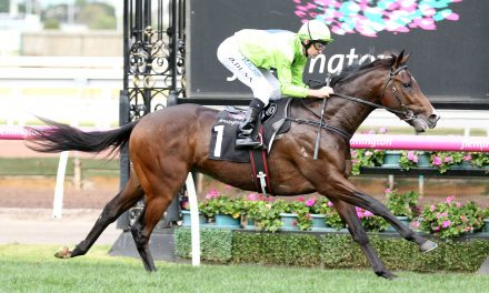 Caulfield Guineas favourite Royal Symphony needs to tune up barrier manners