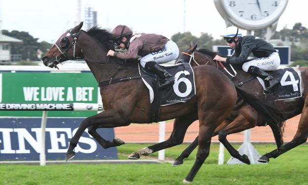 Supply And Demand installed as favourite for 2017 Grafton Cup