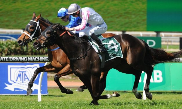 Emerald City bred to run 2 miles in Queensland Cup