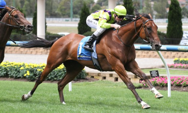 Fab's Cowboy facing distance test in 2017 Townsville Cup