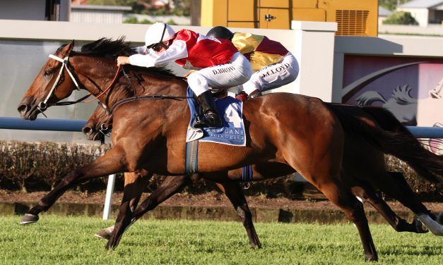 Rowe tips Mukaddamah Son can cause 2017 Cairns Cup boilover