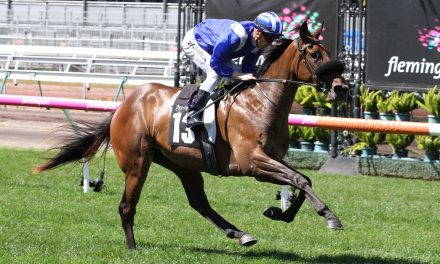 Extra week gives Roomooz the edge in Johnnie Walker Plate