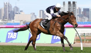 Almandin On Top Of Sydney Cup Field